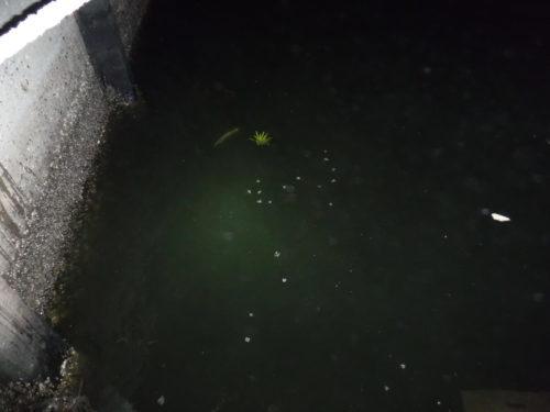 2018.7.30 稚魚